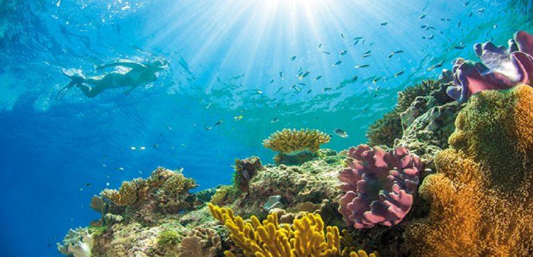 Australia Turismo Subacqueo: le immersioni nel profondo blu
